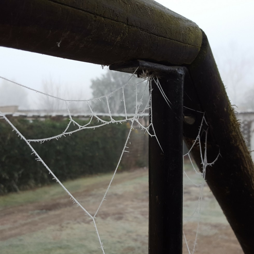 Cobb Web