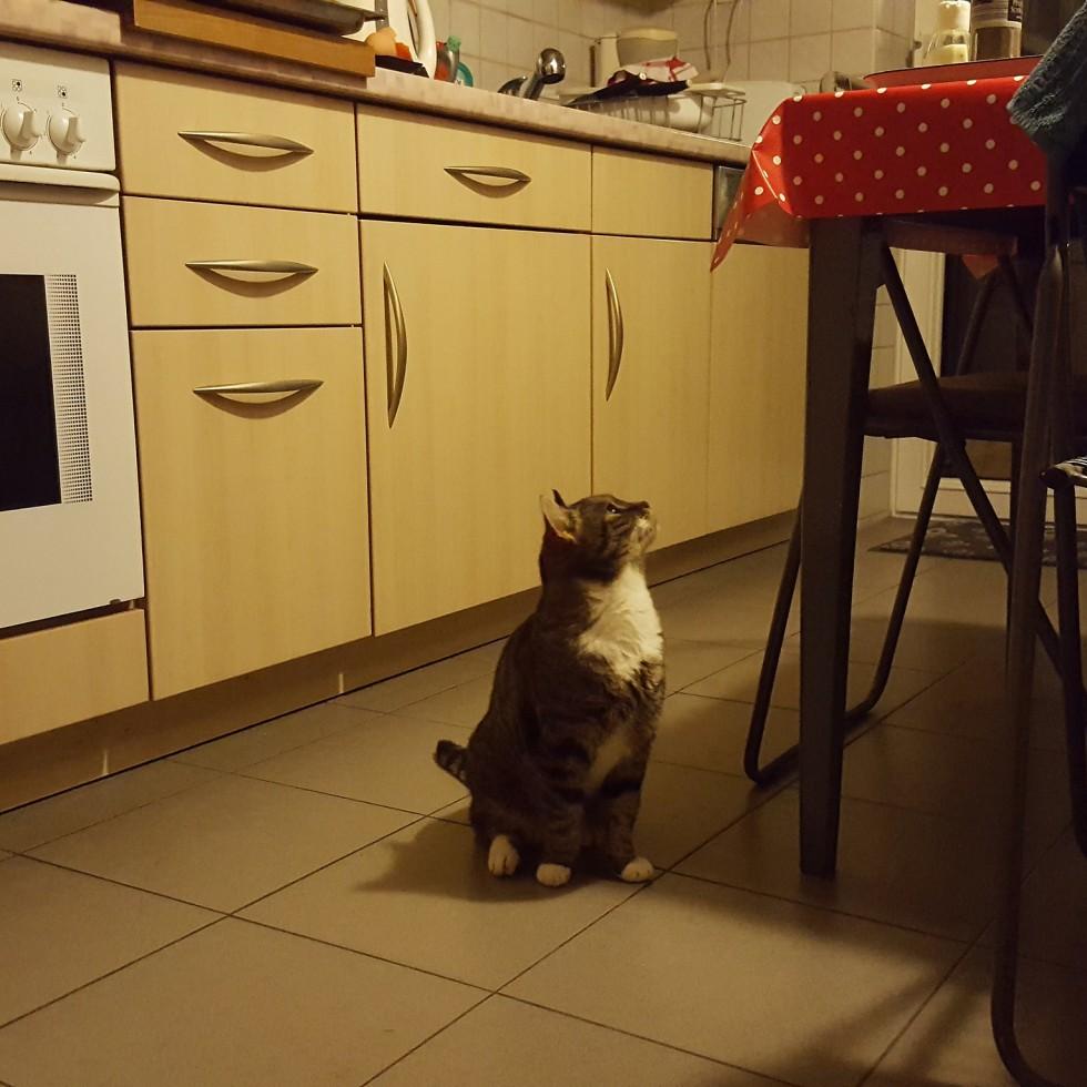 Cat Paula