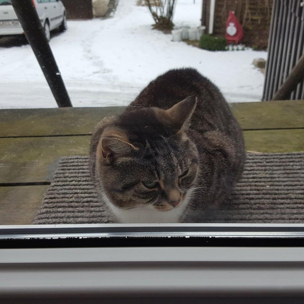 Cold Cat