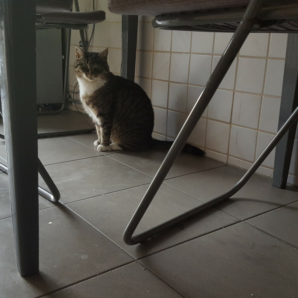 Cat Under The Table